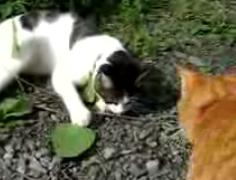 かご猫14