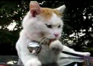 かご猫19