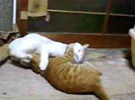 かご猫21