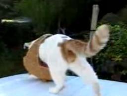 かご猫22