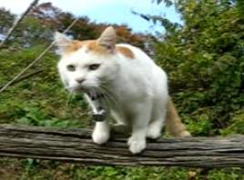 かご猫23
