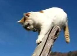 かご猫26