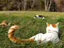 かご猫27
