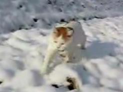 かご猫29