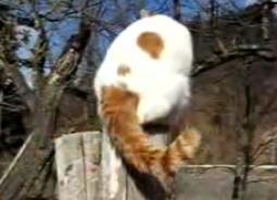 かご猫33
