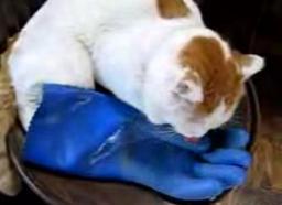 かご猫38