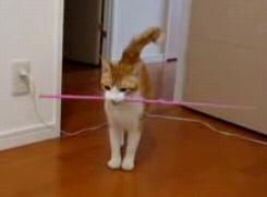 棒をとってくるネコ