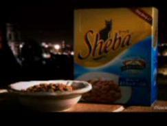 SHEBA Duo3