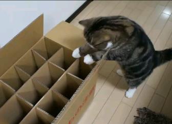 入れない箱とねこ